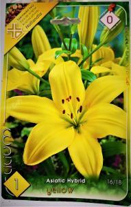 Liliom Yellow