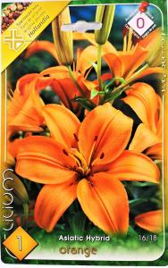 Liliom Orange