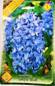 Jácint Delfts Blue