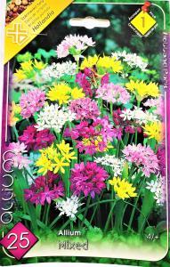 Allium Sziklakerti díszhagyma