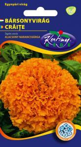 Bársonyvirág Nagyvirágú alacsony, narancssárga