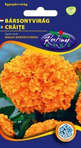 Bársonyvirág Nagyvirágú magas, narancs