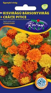 Bársonyvirág Kisvirágú bársonyvirág