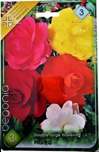 Virághagyma Begónia Mixed