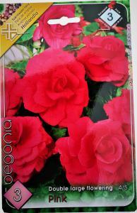 Virághagyma Begónia Pink
