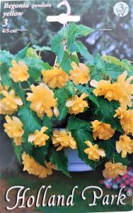 Virághagyma Begónia Yellow