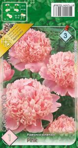 Virághagyma Bazsarózsa, Pünkösdi rózsa Pink