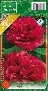Virághagyma Bazsarózsa, Pünkösdi rózsa Red
