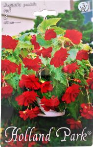 Virághagyma Csüngővirágú Begónia Red