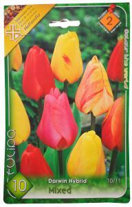 Tulipán Darwin Hybrid