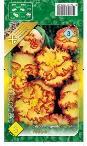 Virághagyma Begónia Crispa Marginata