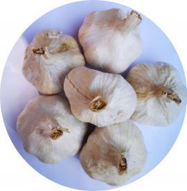 Messidrome őszi ültetésű, áttelelő fokhagyma kimért 0.5 kg